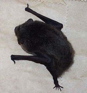Bat_3